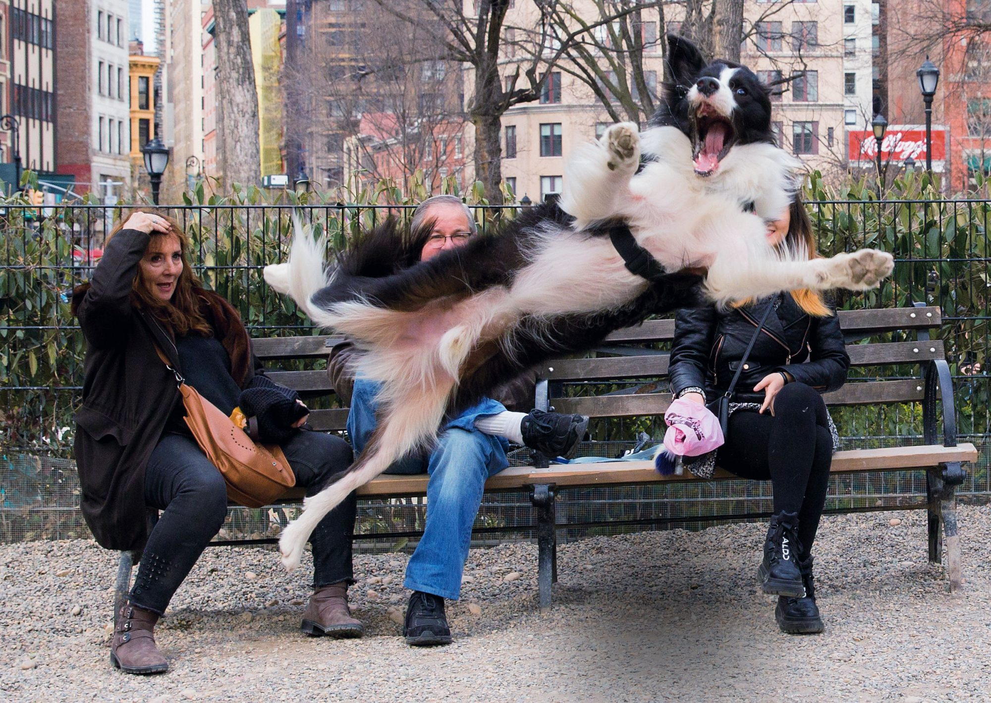 Barking! book March 24th 2019 in Union Square in one of those dog runs.