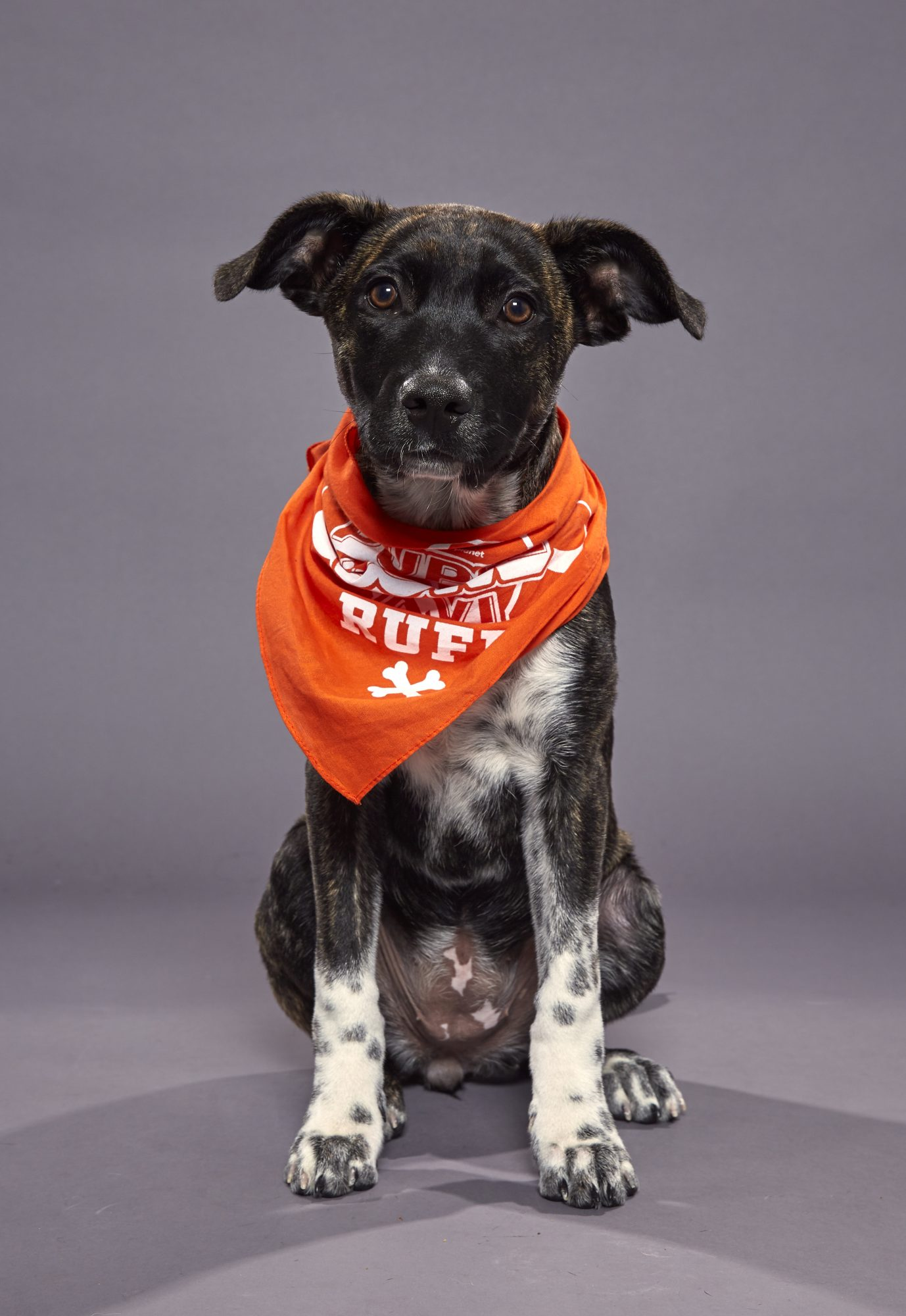 Team: Ruff                             Rescue: Foster Dogs NYC of New York City