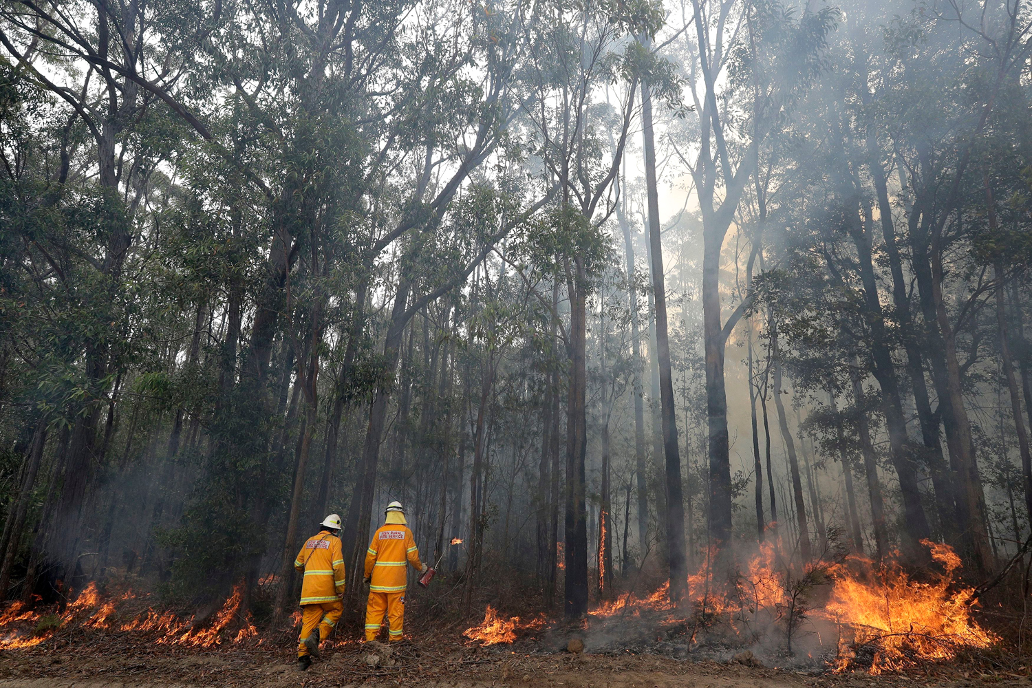 Firefighters manage a controlled burn near Tomerong