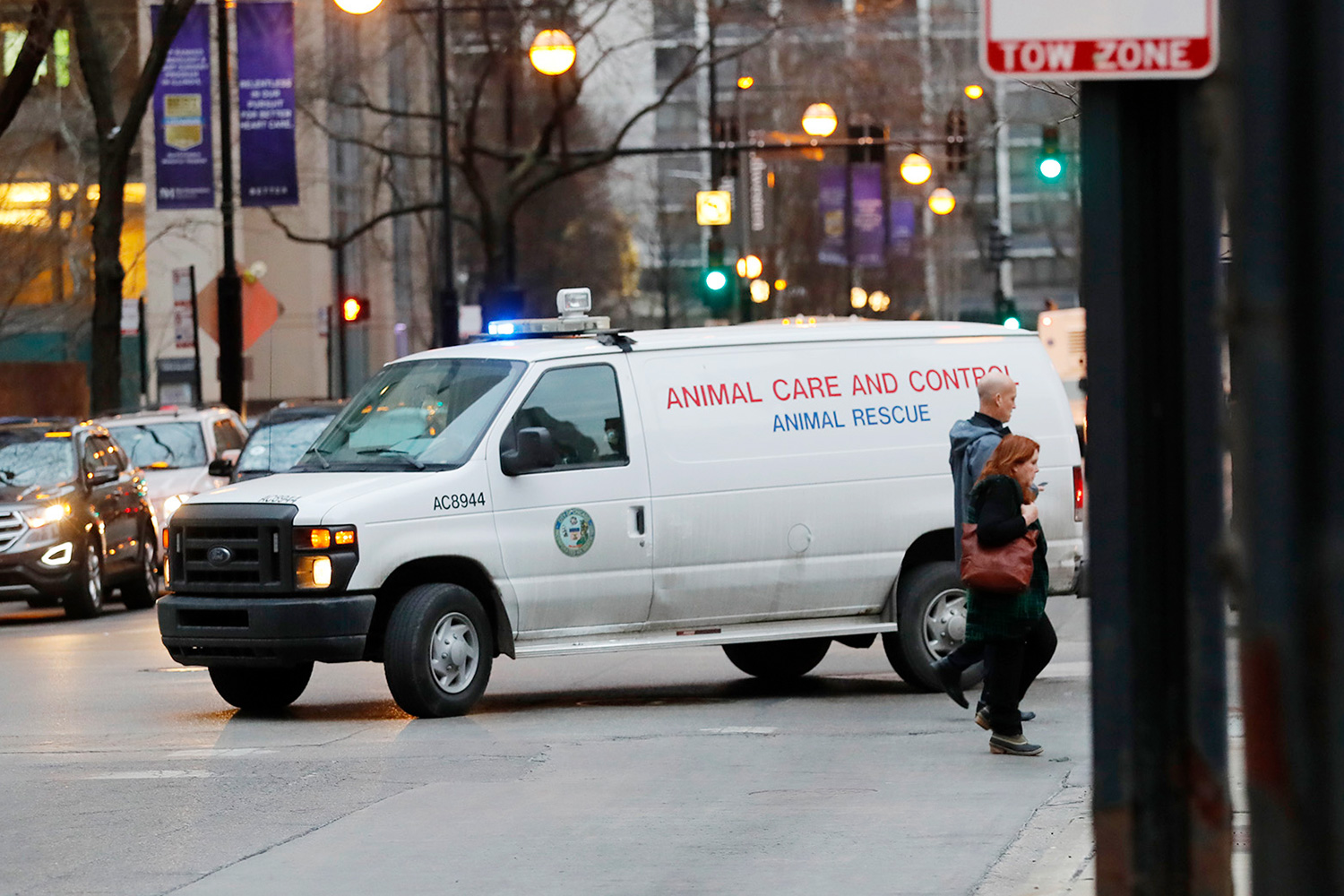 An animal control van turns from East Huron Street in the Gold Coast area of Chicago, where police and animal control were searching for a coyote spotted walking with a limp that may have bitten a child in the the Lincoln Park area and a man outside Northwestern Memorial Hospita