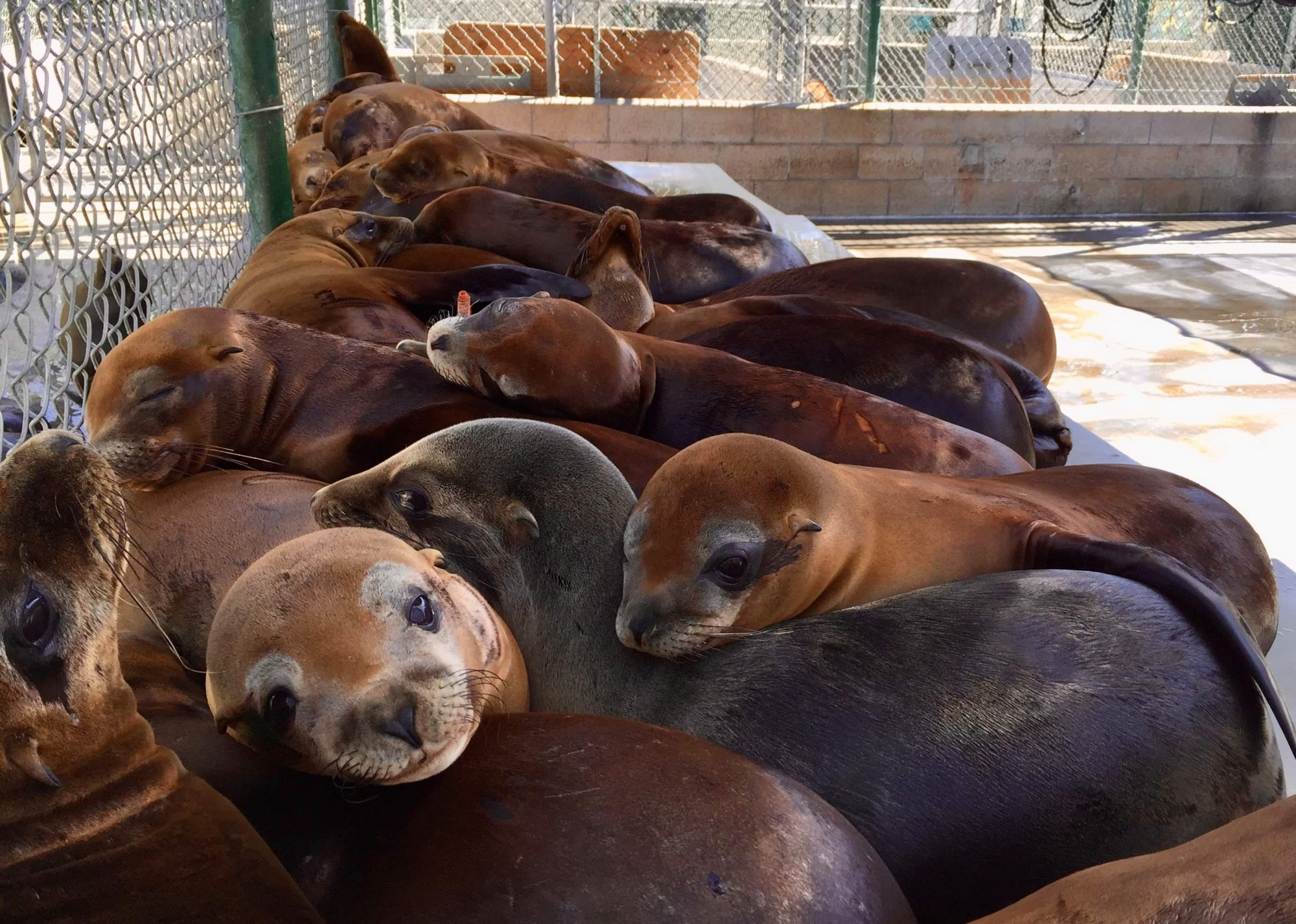 Animal Hospital That Rehabs Seals and Sea Lions May Close if $1M Isn't Raised by June