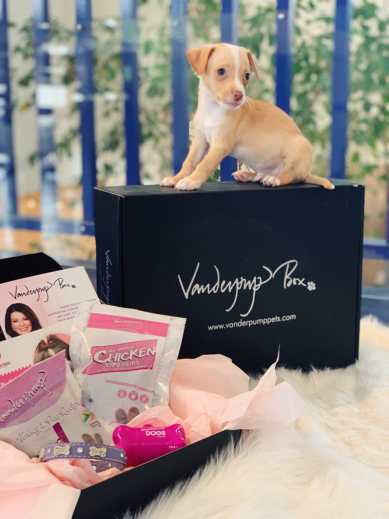 v-day hotel package for a dog