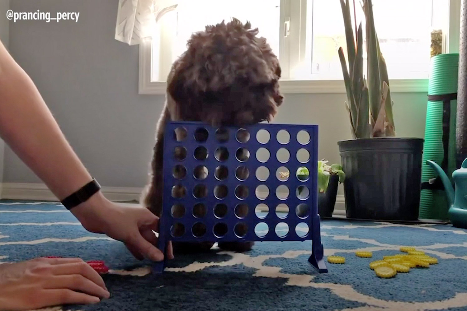 Connect 4 Dog