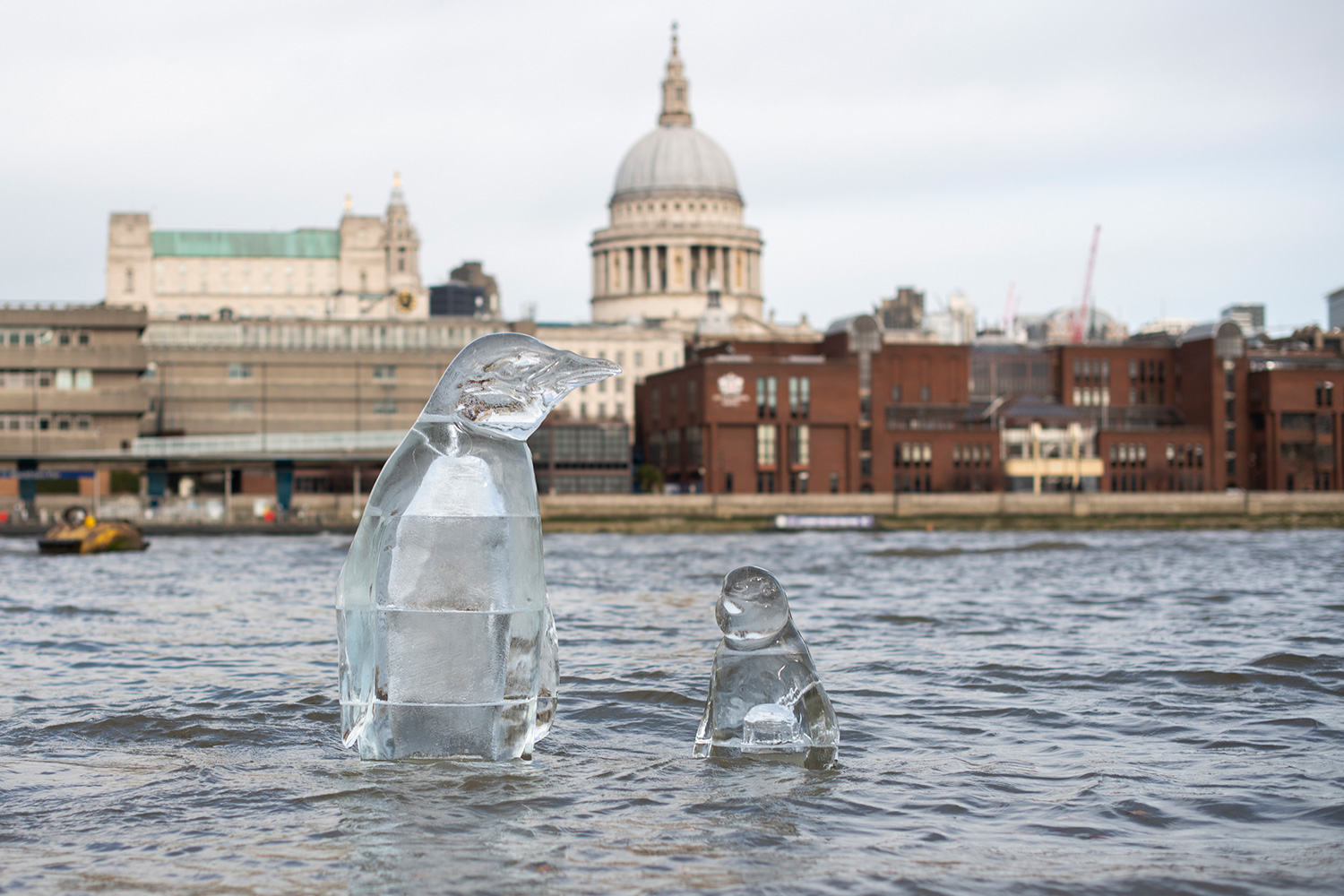 Greenpeace activists installed a two-metre high penguin ice sculpture on the shore of the River Thames opposite St. Paul's Cathedral. It is part of a campaign to highlight the threats to marine life as part of a global call by Greenpeace for greater action on ocean protection.