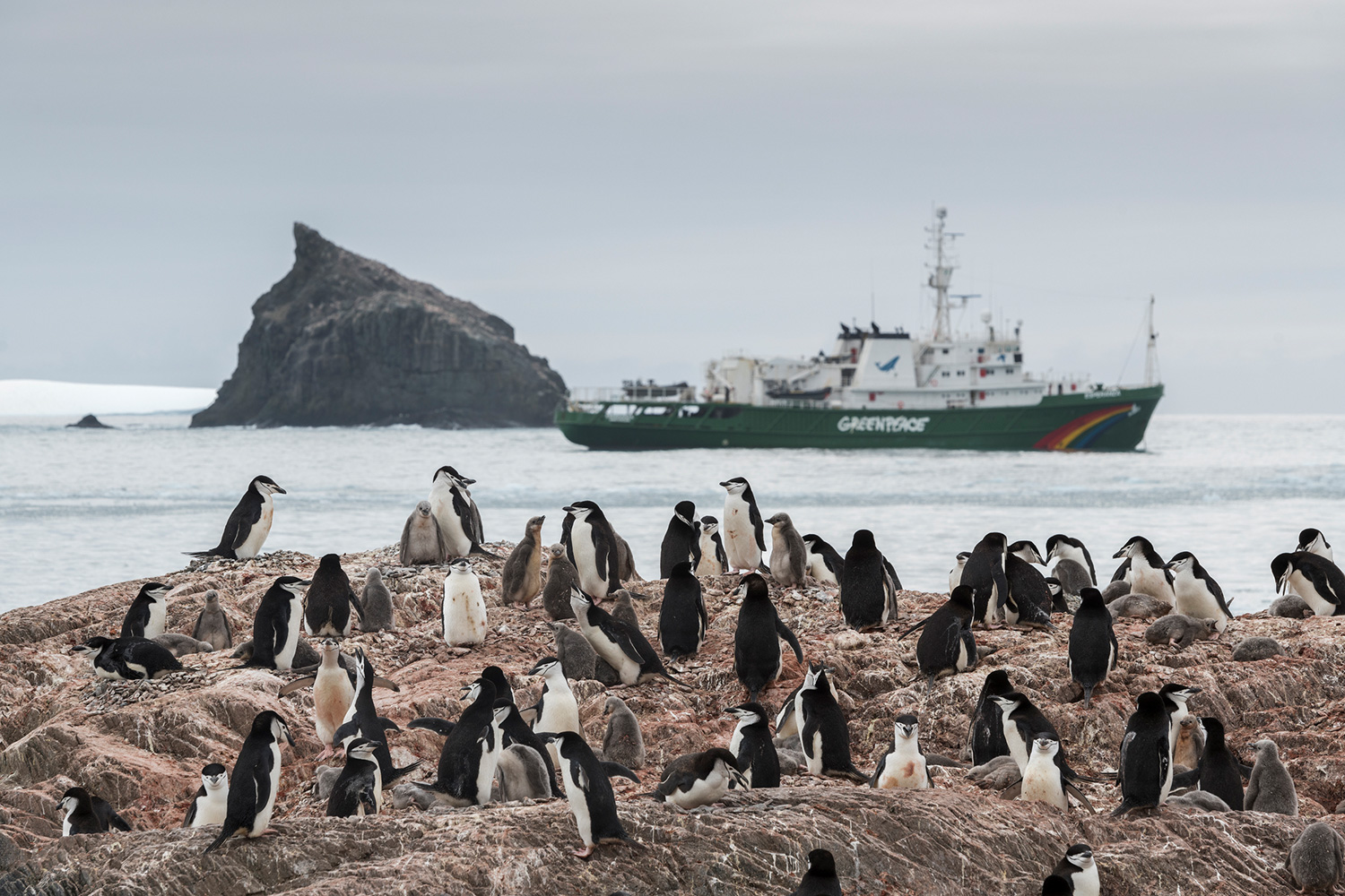 A Chinstrap penguin colony on Elephant Island and Greenpeace ship the Esperanza in the background. Greenpeace is in the Antarctic to investigate the impacts of the climate crisis as part of the Protect the Oceans Expedition, a year long pole to pole ship tour, campaigning for the establishment of ocean sanctuaries to safeguard this frozen region and its penguins, seals and whales, and to help address the climate emergency. (This picture was taken in 2020 during the Antarctic leg of the Pole to Pole expedition under the Dutch permit number RWS-2019/40813)