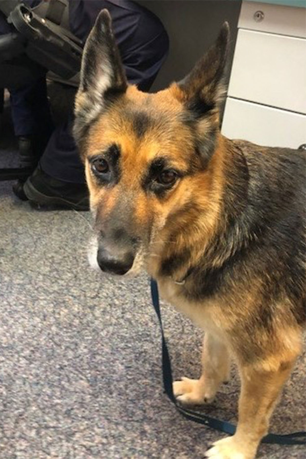German shepherd treads water for 11 hours to save owner
