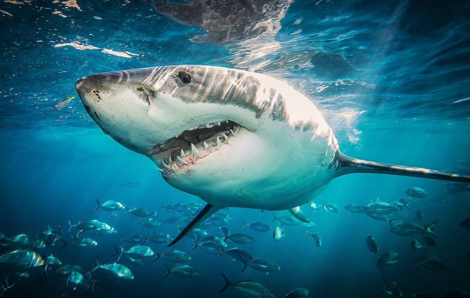 Shark Week 2020 Will Return to Discovery Channel in August