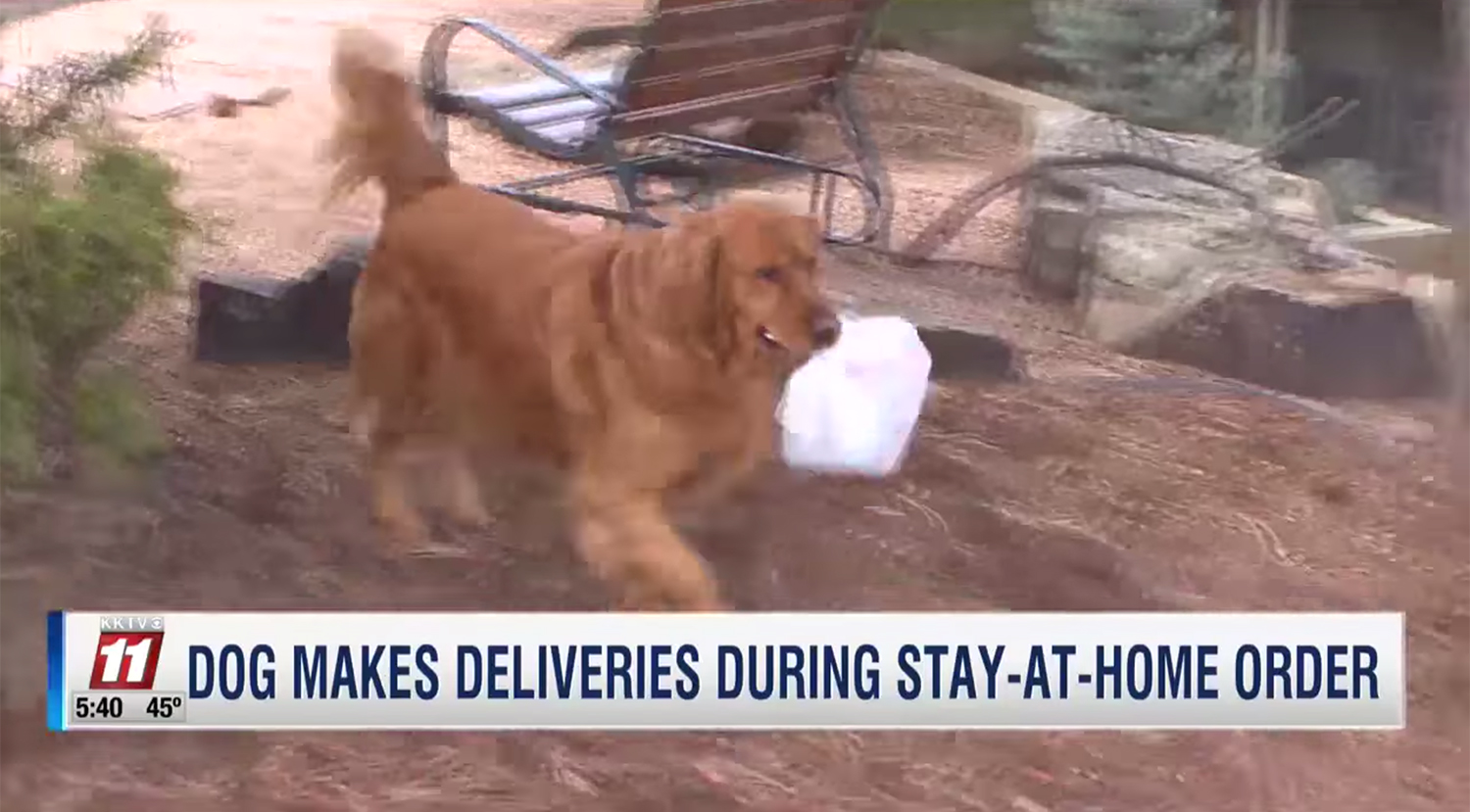 dog delivers groceries