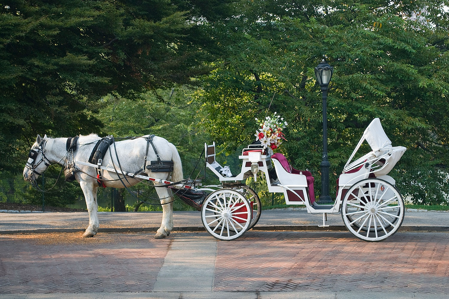 A horse and buggy in Central Park