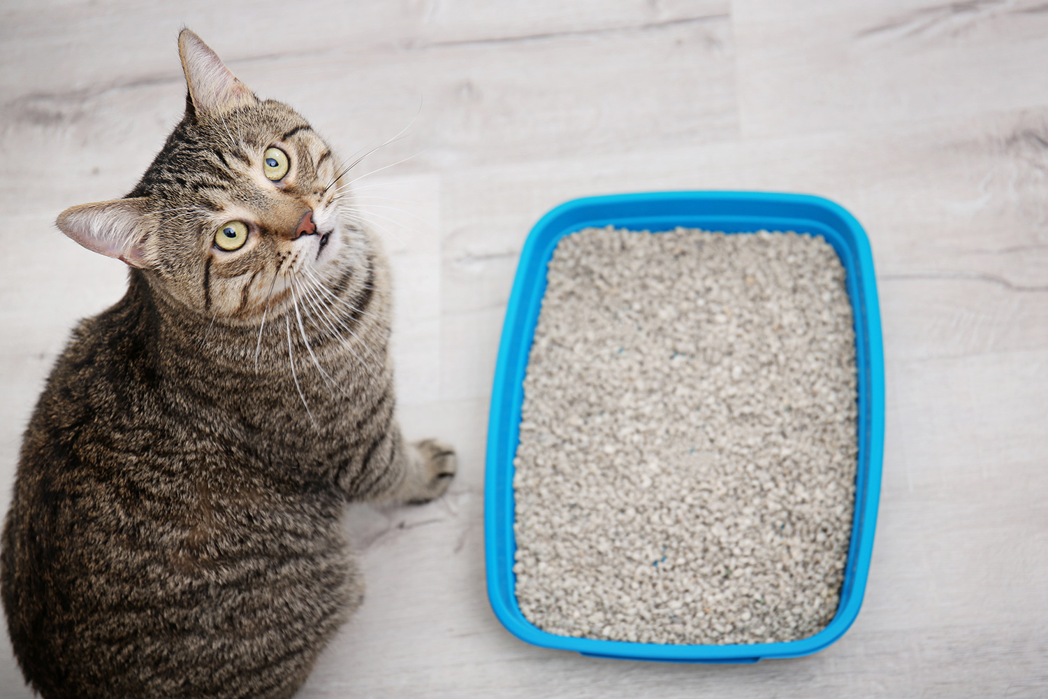 This Cat Litter Has Nearly 13,000 Five-Star Reviews on Amazon Because It Keeps Even the Smallest Apartments Odor-Free
