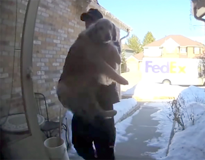 FedEx driver finds Colorado woman's lost dog, returns her home