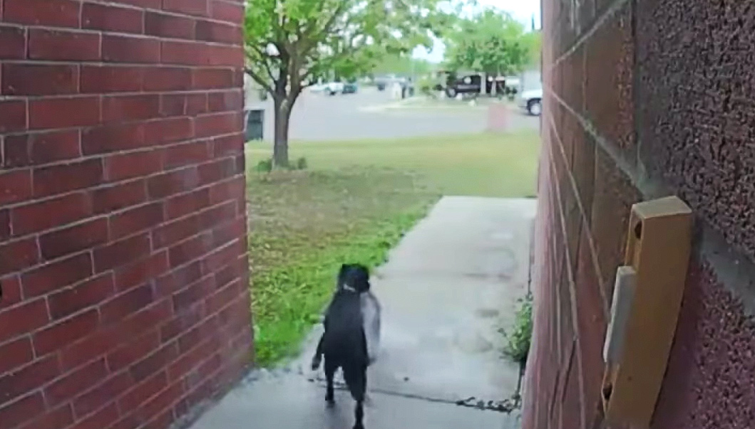 Dog stealing package