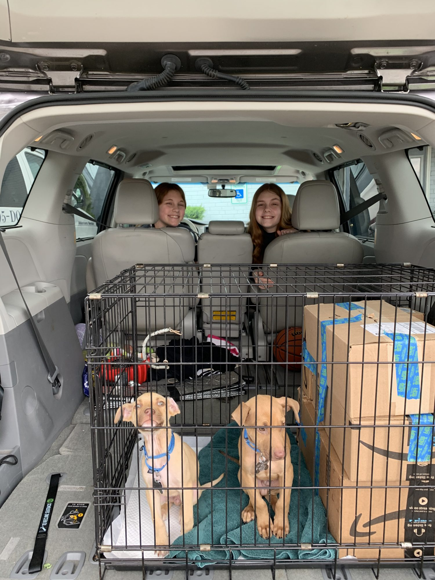 dogs brought from south for fostering