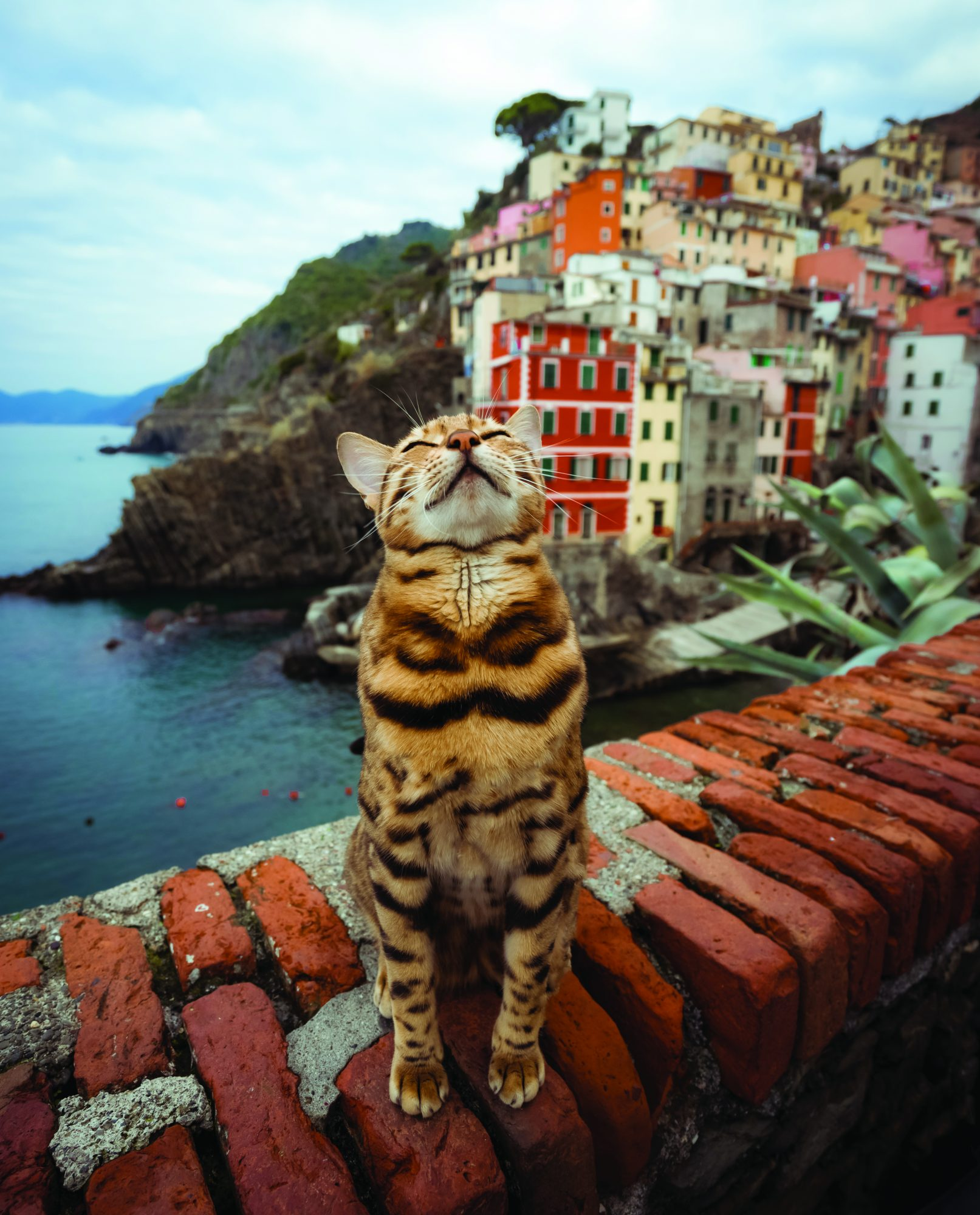See the World with Suki the Travel Cat