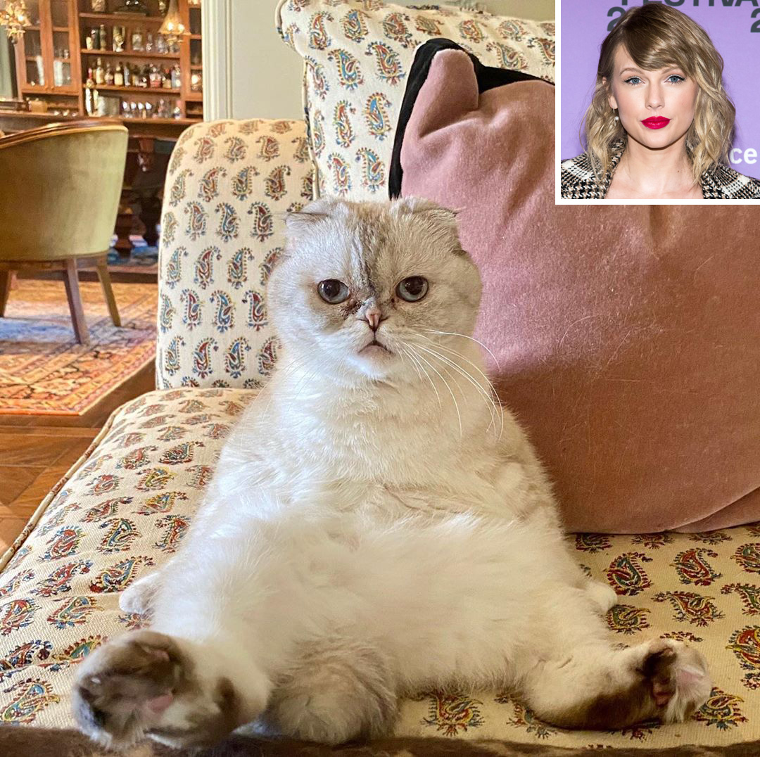 Taylor Swift's cat Captain Olivia Benson is off duty