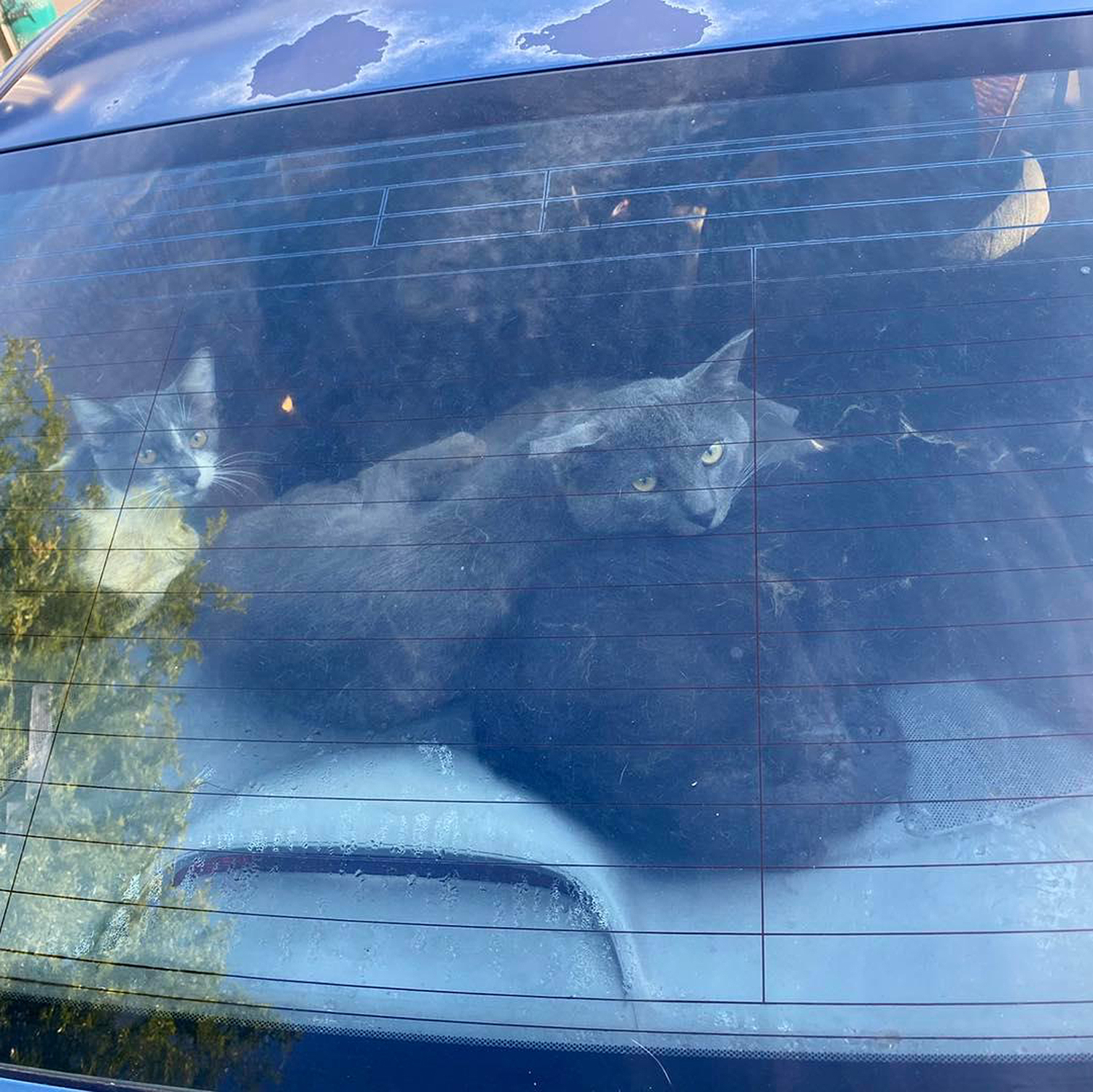 cats rescued from hot car