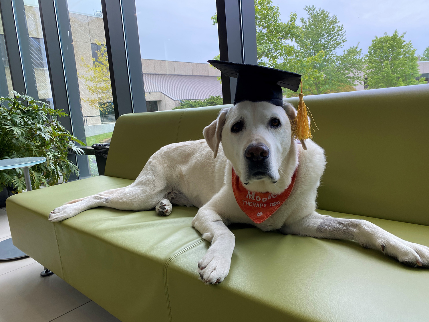 Moose the Virginia Tech therapy dog receives an honorary degree