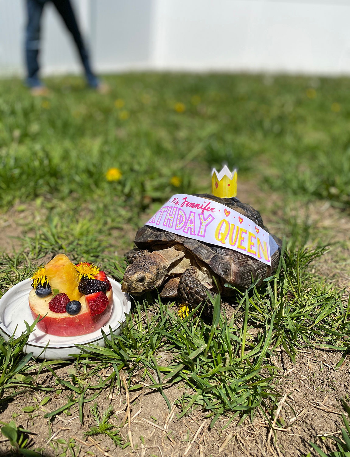 53-year-old tortoise needs home after owner dies of COVID-19
