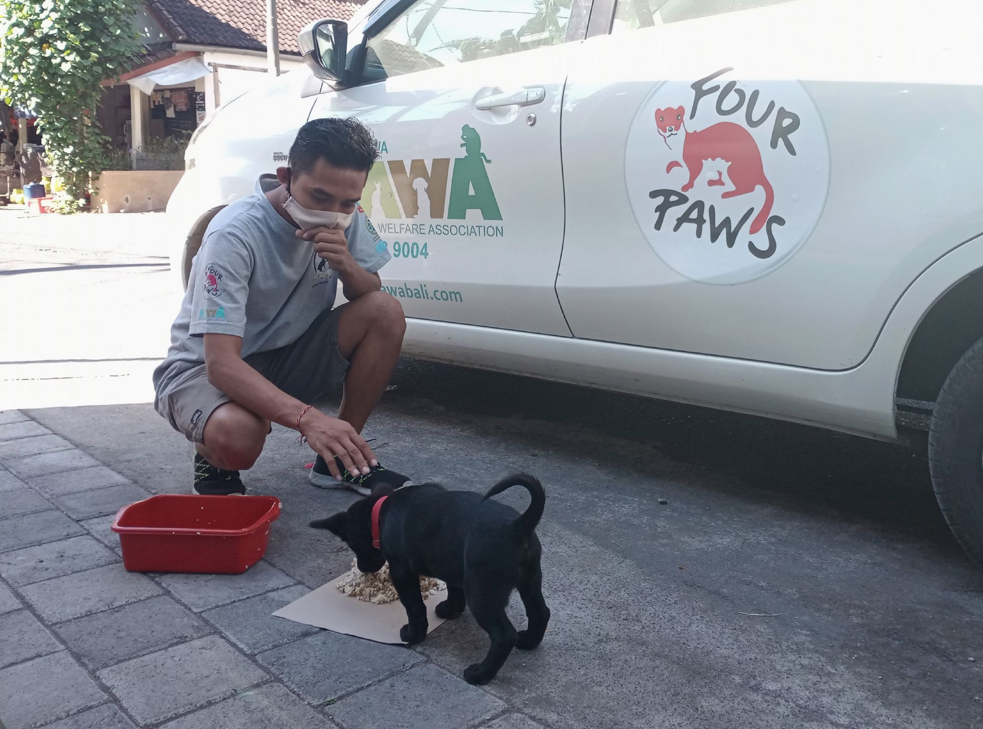 FOUR PAWS and Bali Animal Welfare Association a