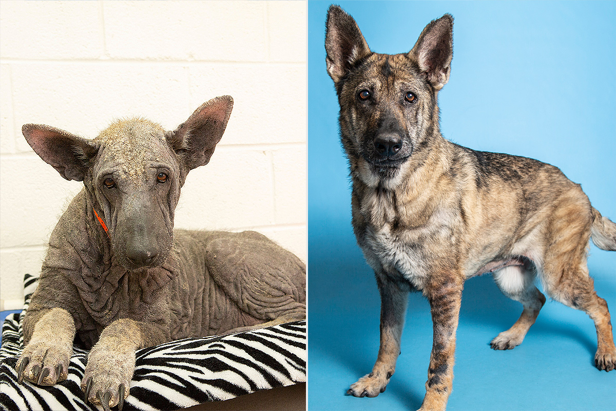 Dog Makes Incredible 5-Month Transformation, Now Ready For a New Home