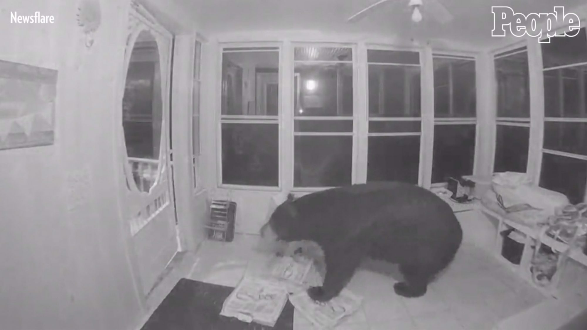 Black Bear breaks into house for pizza