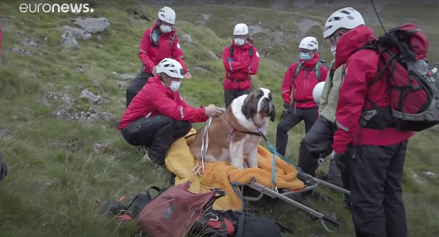 St. Bernard rescued