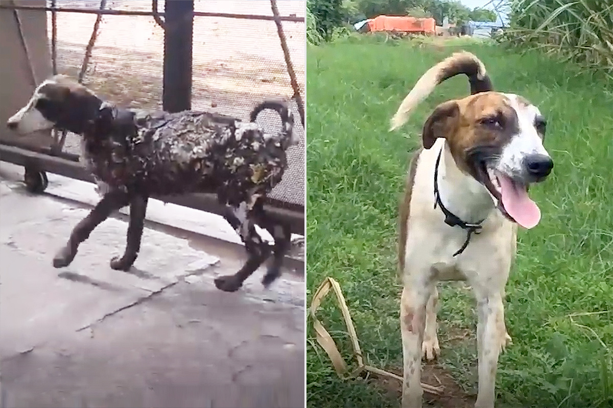 Dog Makes Incredible Transformation After Being Found on the Side of the Road