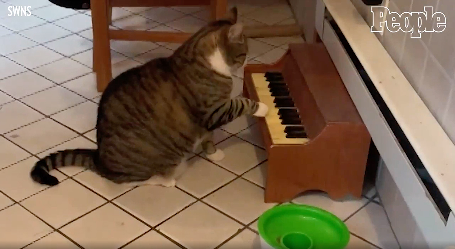 Cat Plays Piano for Attention