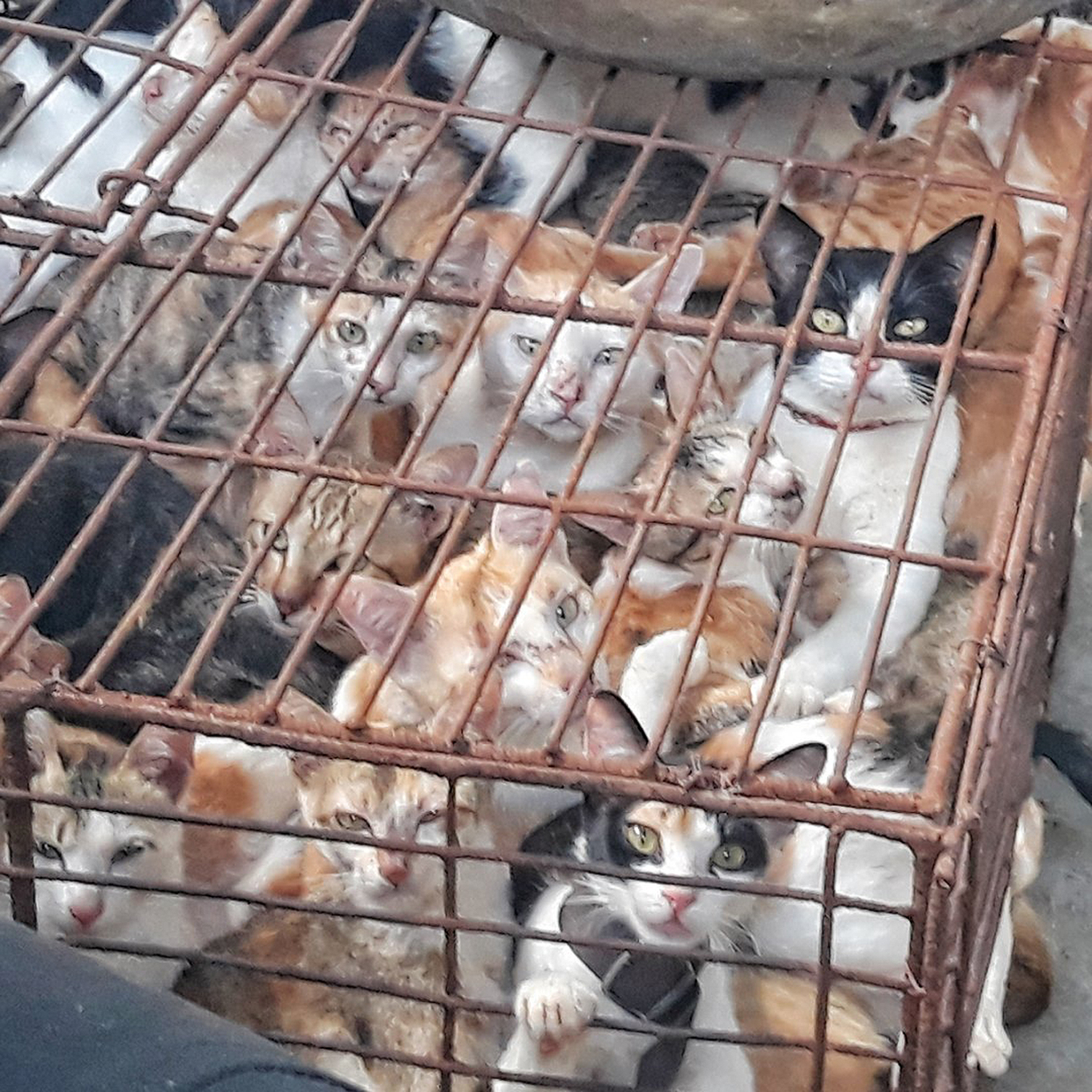 cat meat trade Vietnam