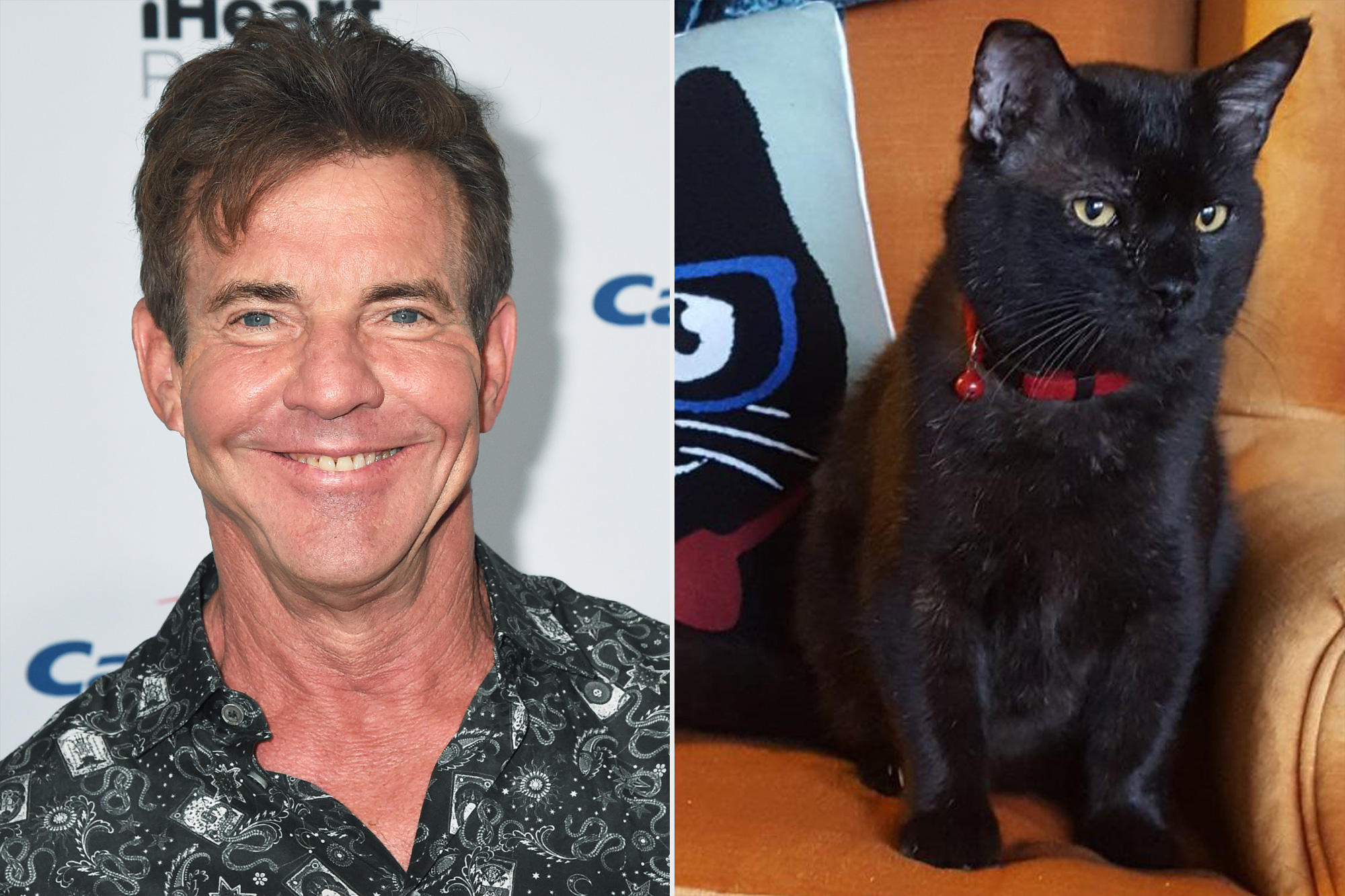 Dennis Quaid Adopts a Black Cat with the Same Name: 'I Just Couldn't Resist'