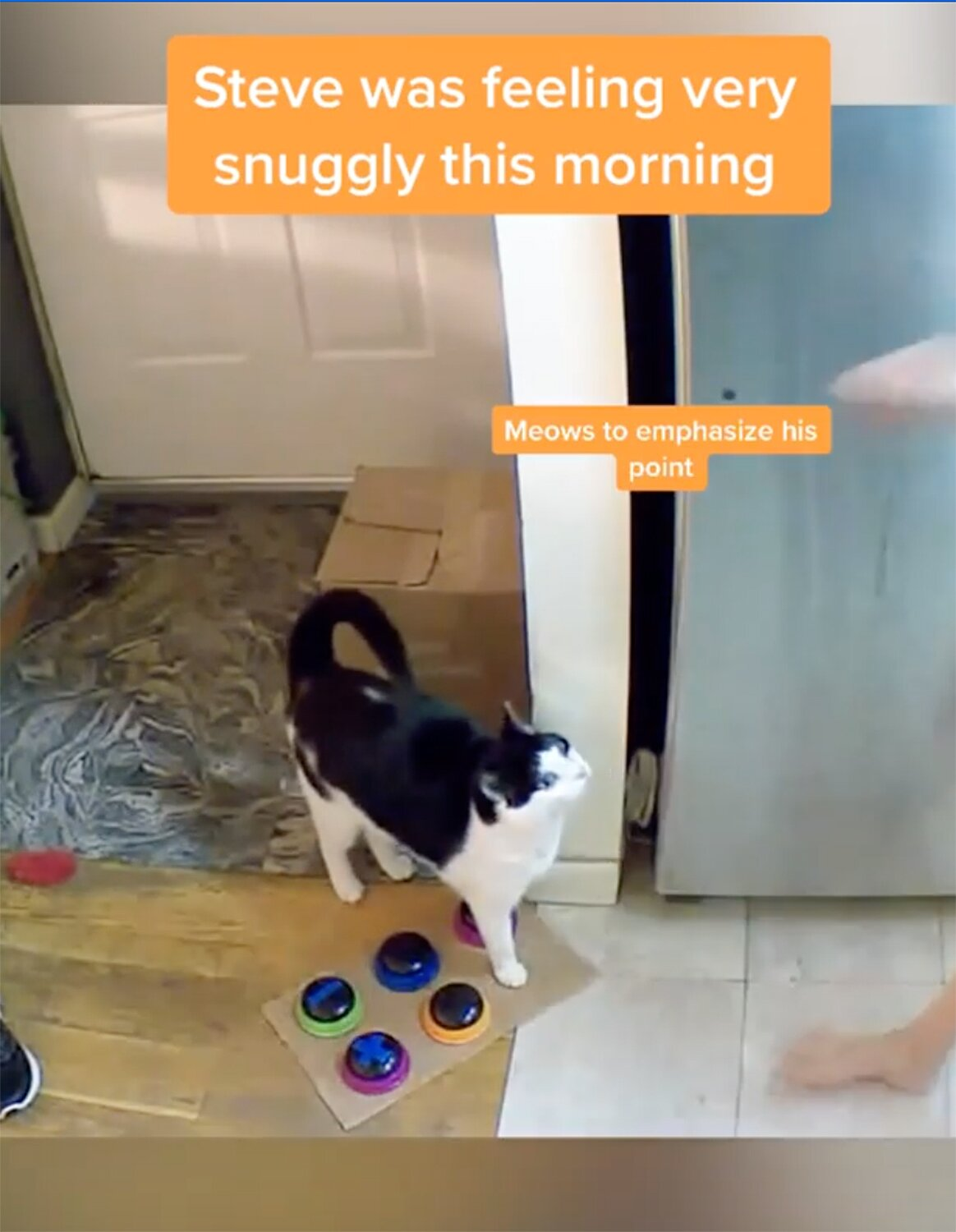 Cat Uses Talking Buttons To Demand Food Snuggles Kittynip More People Com