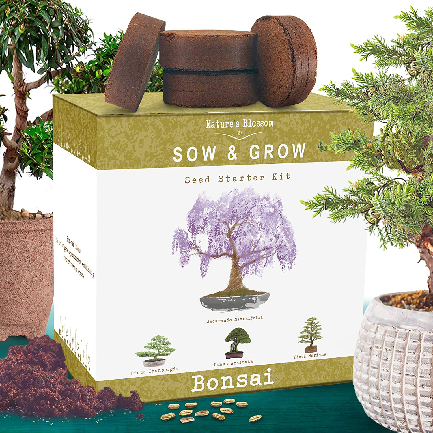 This 25 Bonsai Tree Kit Is Loved By Amazon Shoppers People Com