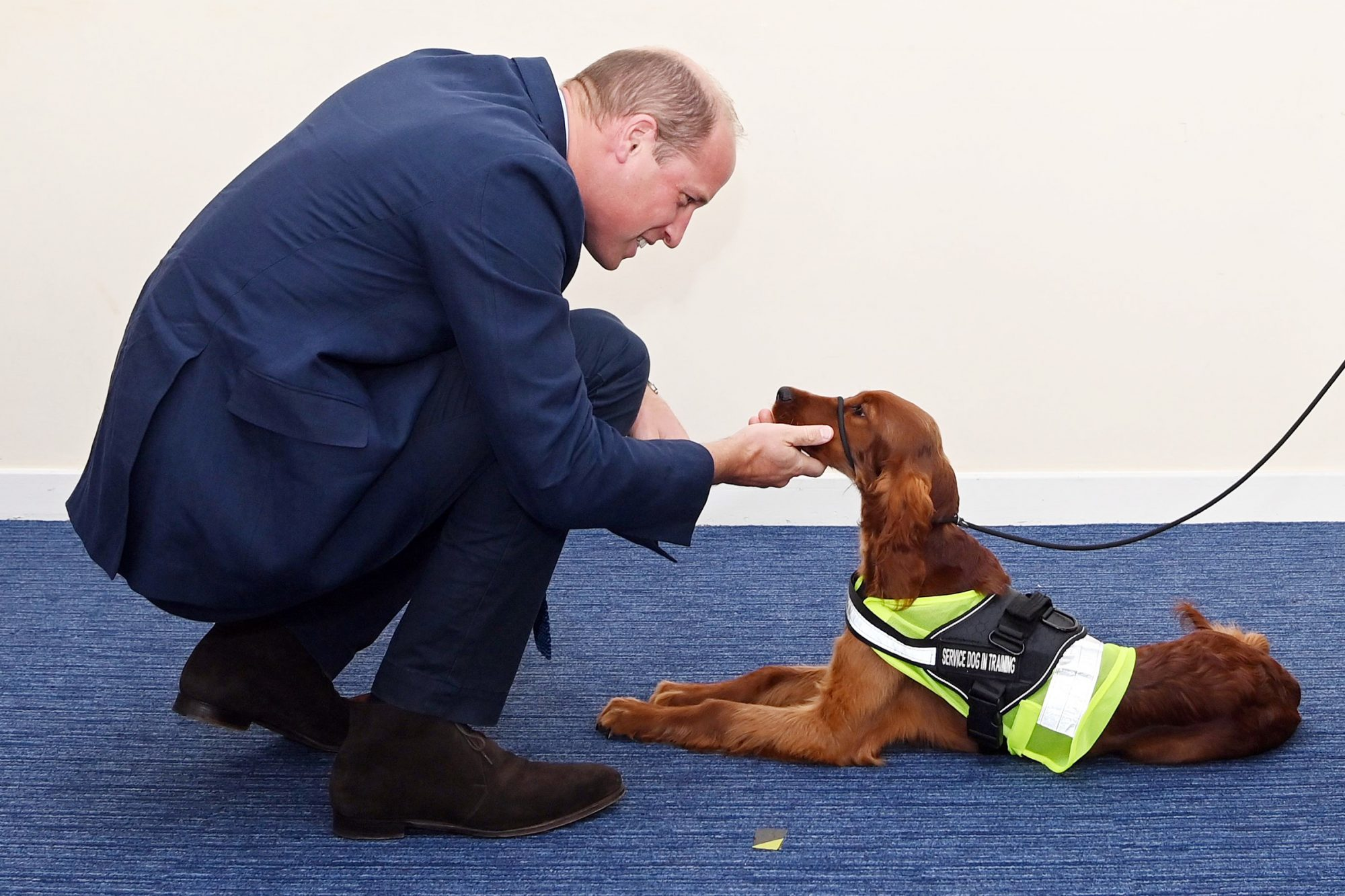 Prince William meets Tara, a 5 month old Irish Red Setter, trained as a PTSD training dog. Prince William visit to PSNI Garnerville, Belfast, Northern Ireland, UK - 09 Sep 2020