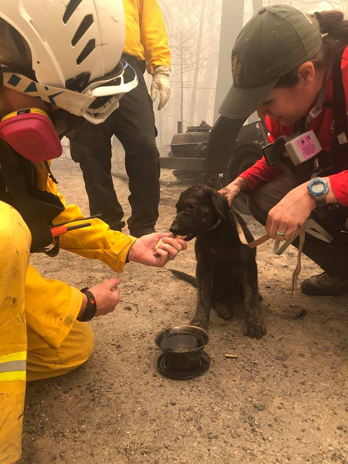 Puppy rescued from fires