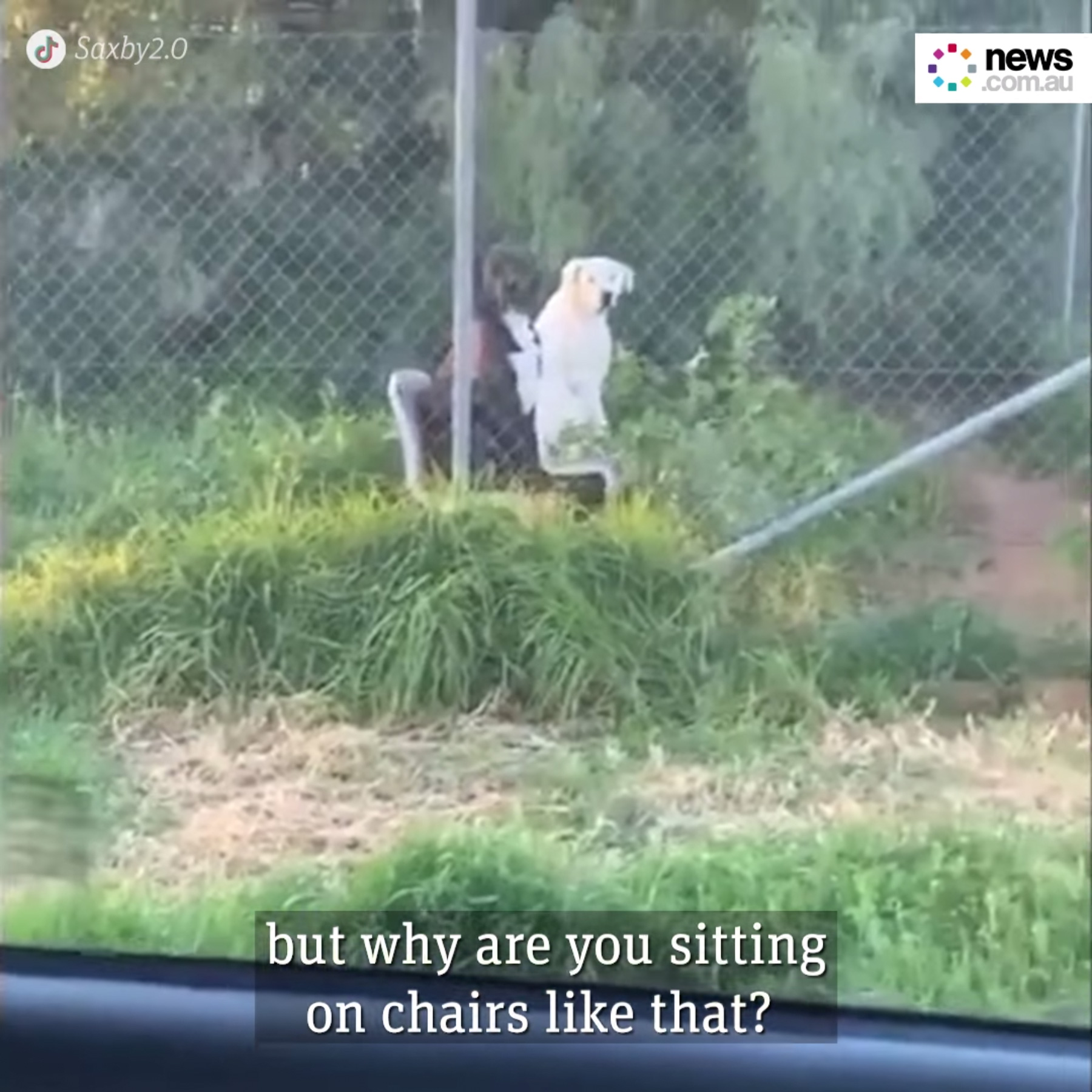 Dogs sitting on chairs freaks bloke out