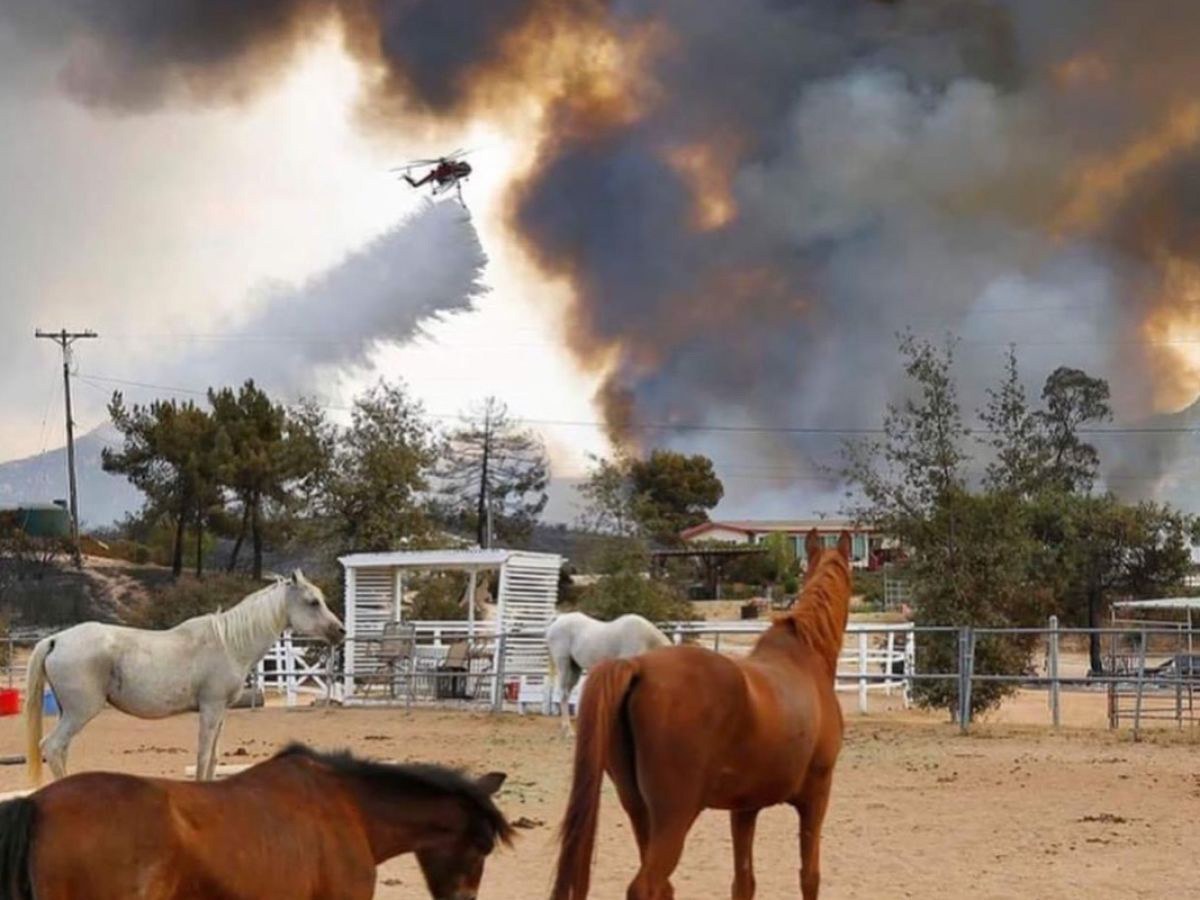 Valley Fire Horse Help