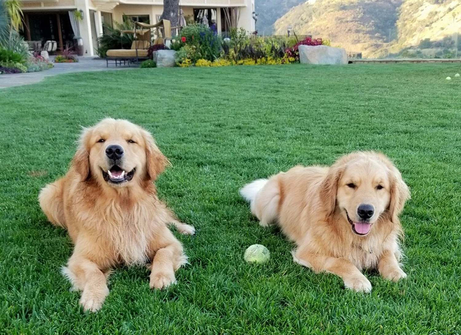 Full House dogs
