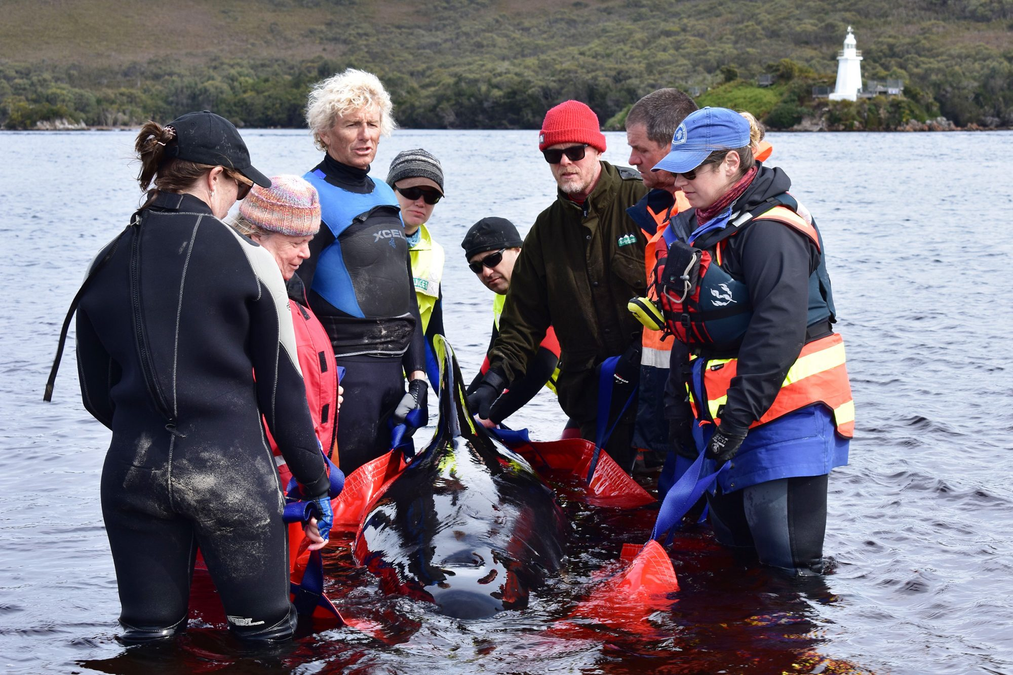 Rescuers Work To Save Hundreds Of Whales Stranded In Tasmania's Macquarie Harbour