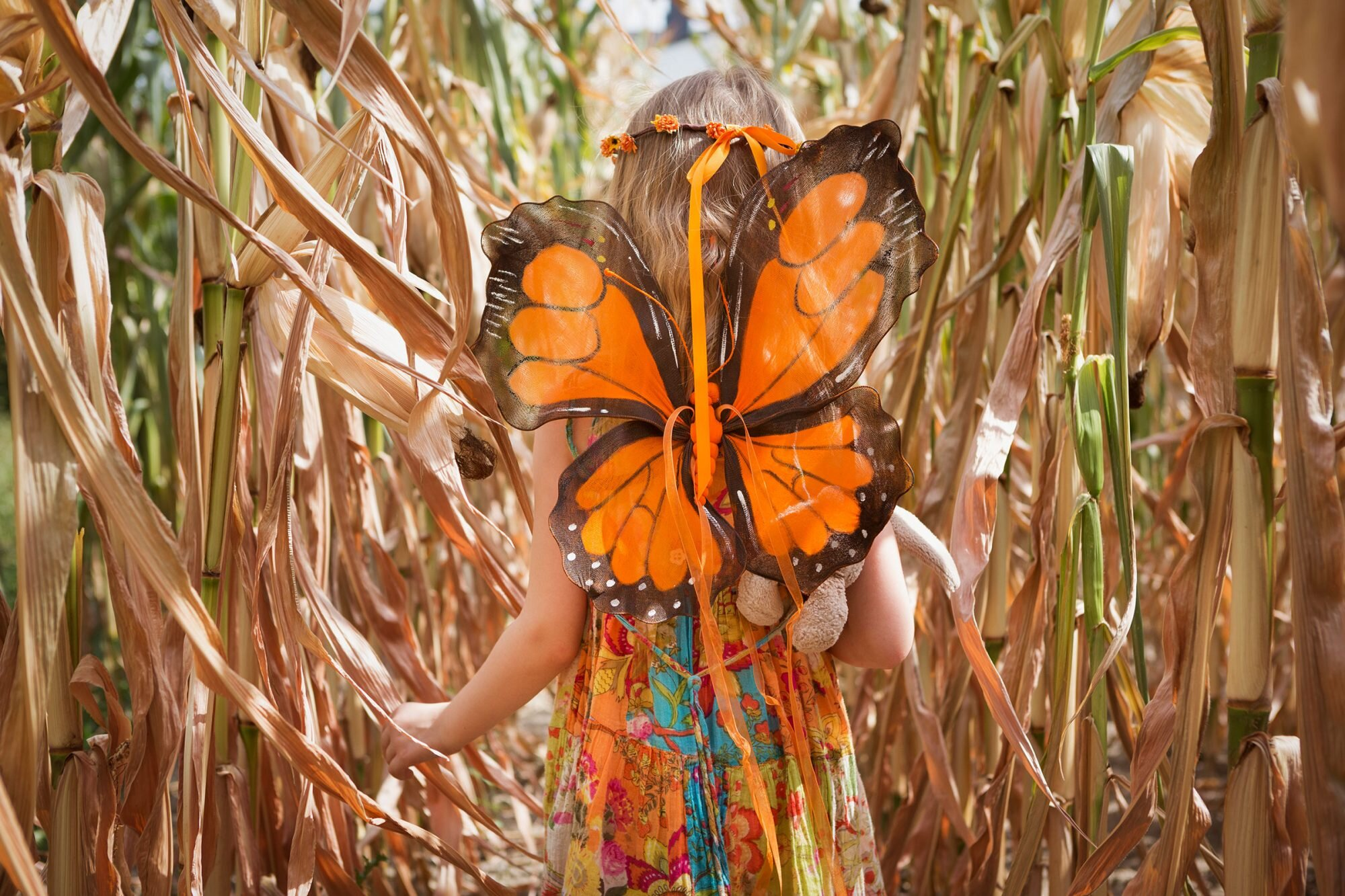 Child wearing orange butterfly wings in a field of tall dried maize