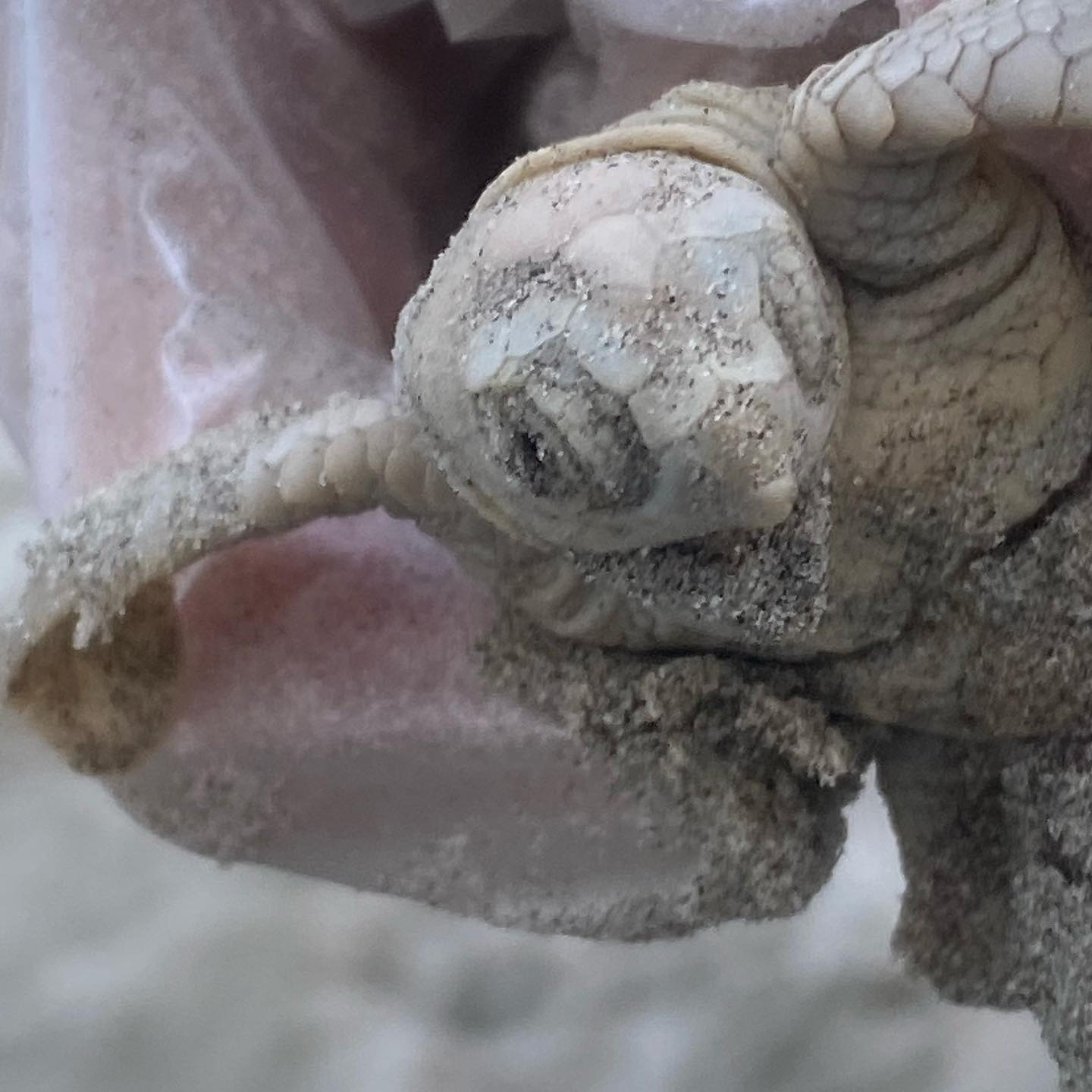Rare White Seal Turtle Found Washed Ashore on South Carolina Beach: 'A First for Everyone'