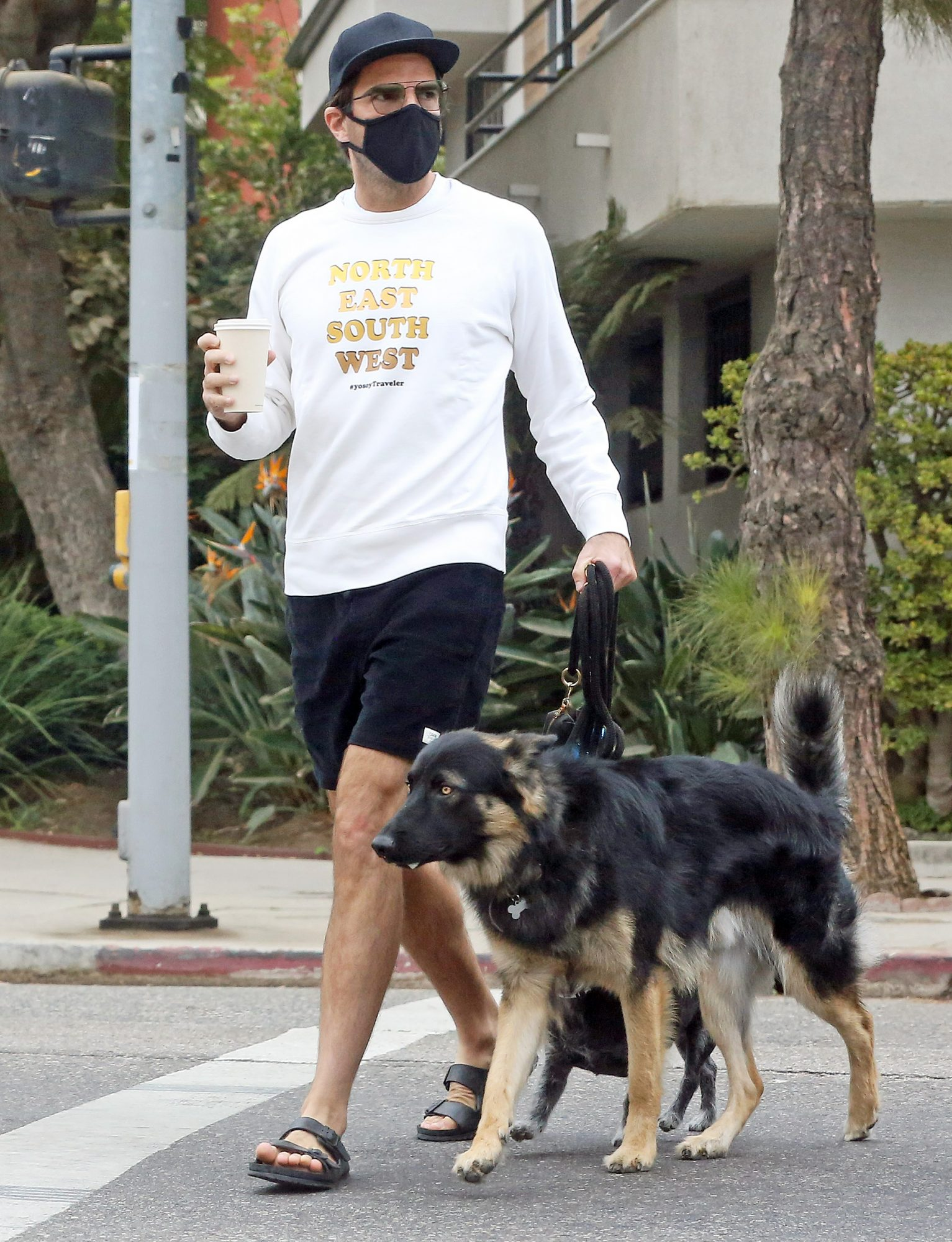 Zachary Quinto takes his dogs to the park