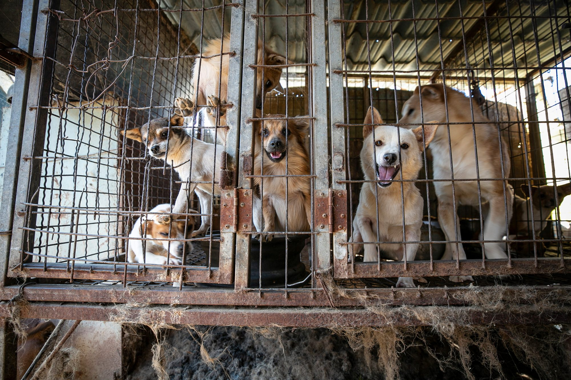 South Korea Dog Meat Farm 17 Rescue