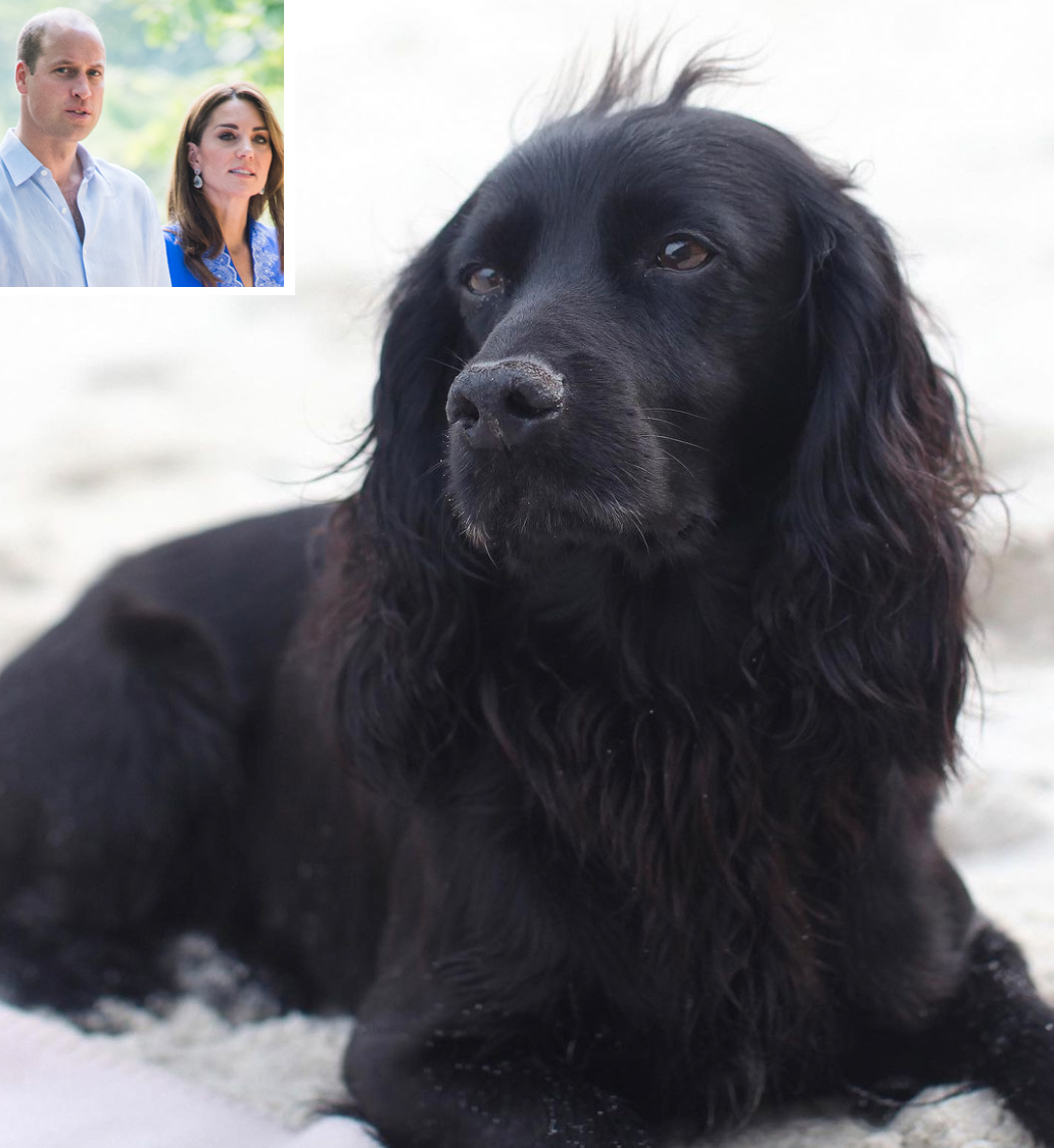 Lupo, Prince William and Kate Middleton