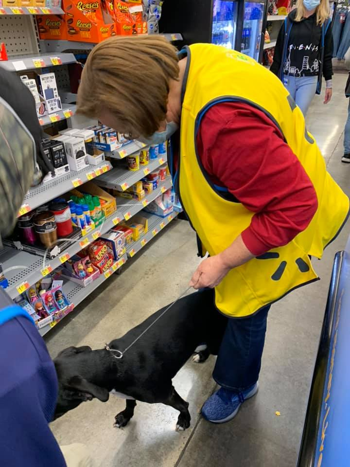 missing dog found in Walmart