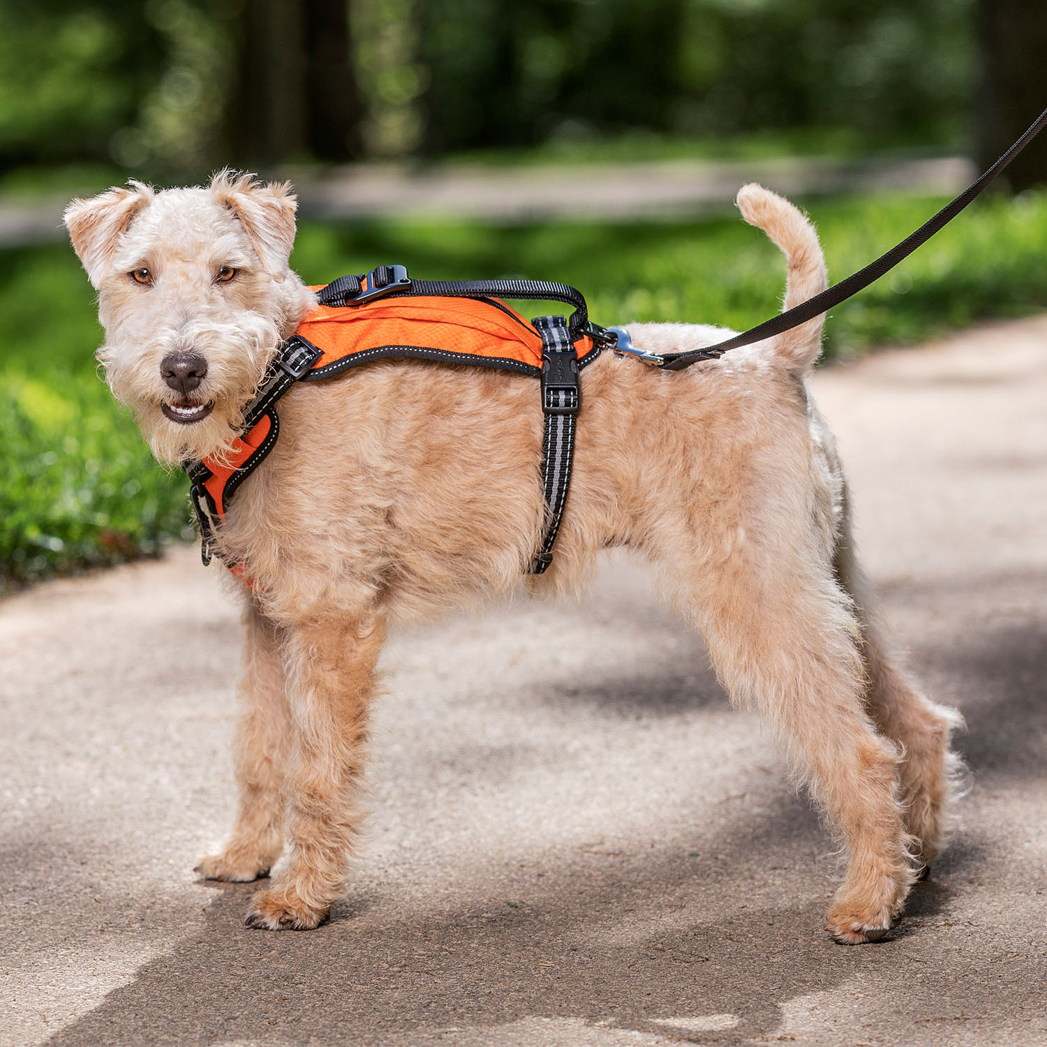 pet awards 2020 runner-up products - dog wearing a harness