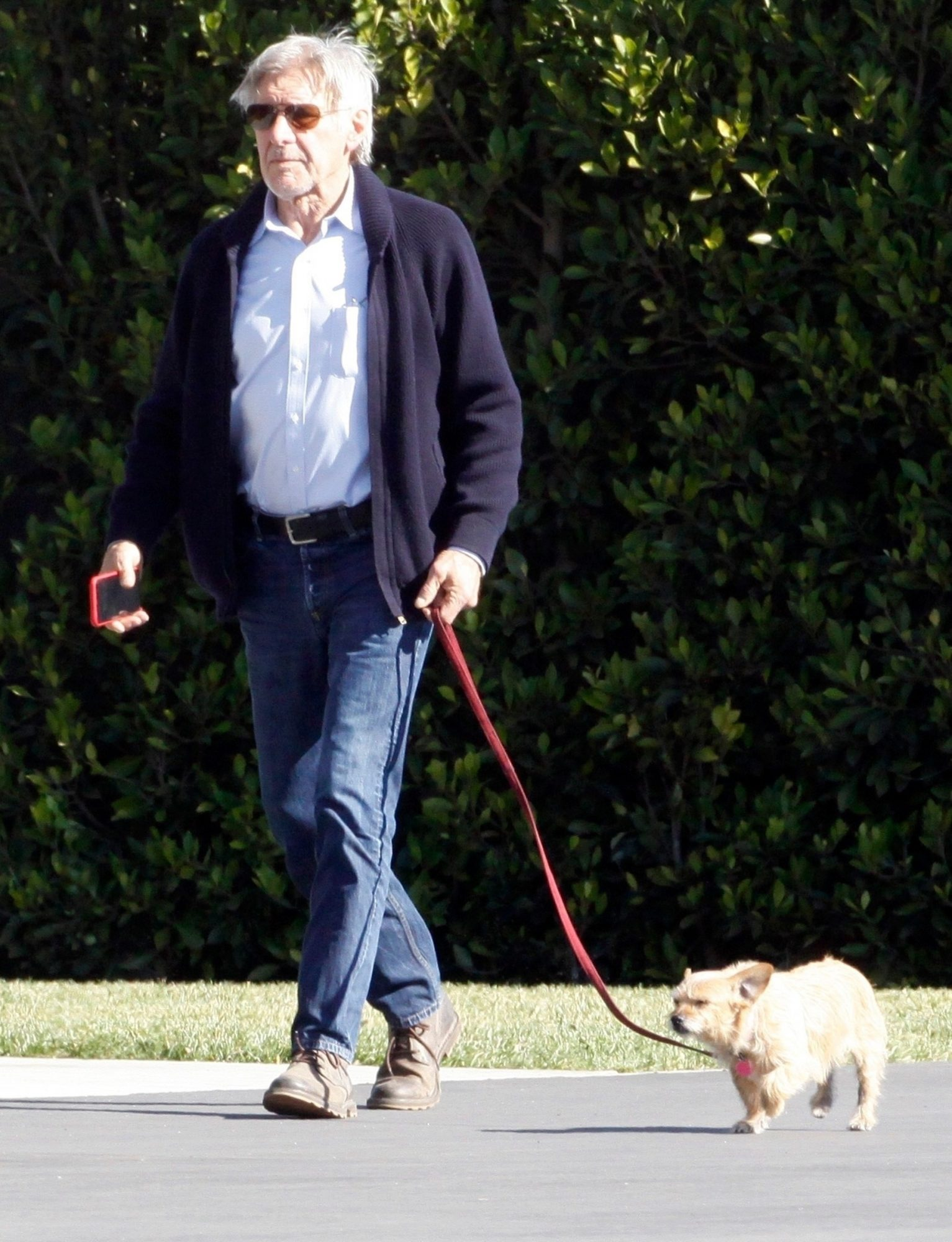 Harrison Ford and Dog Land Private Jet