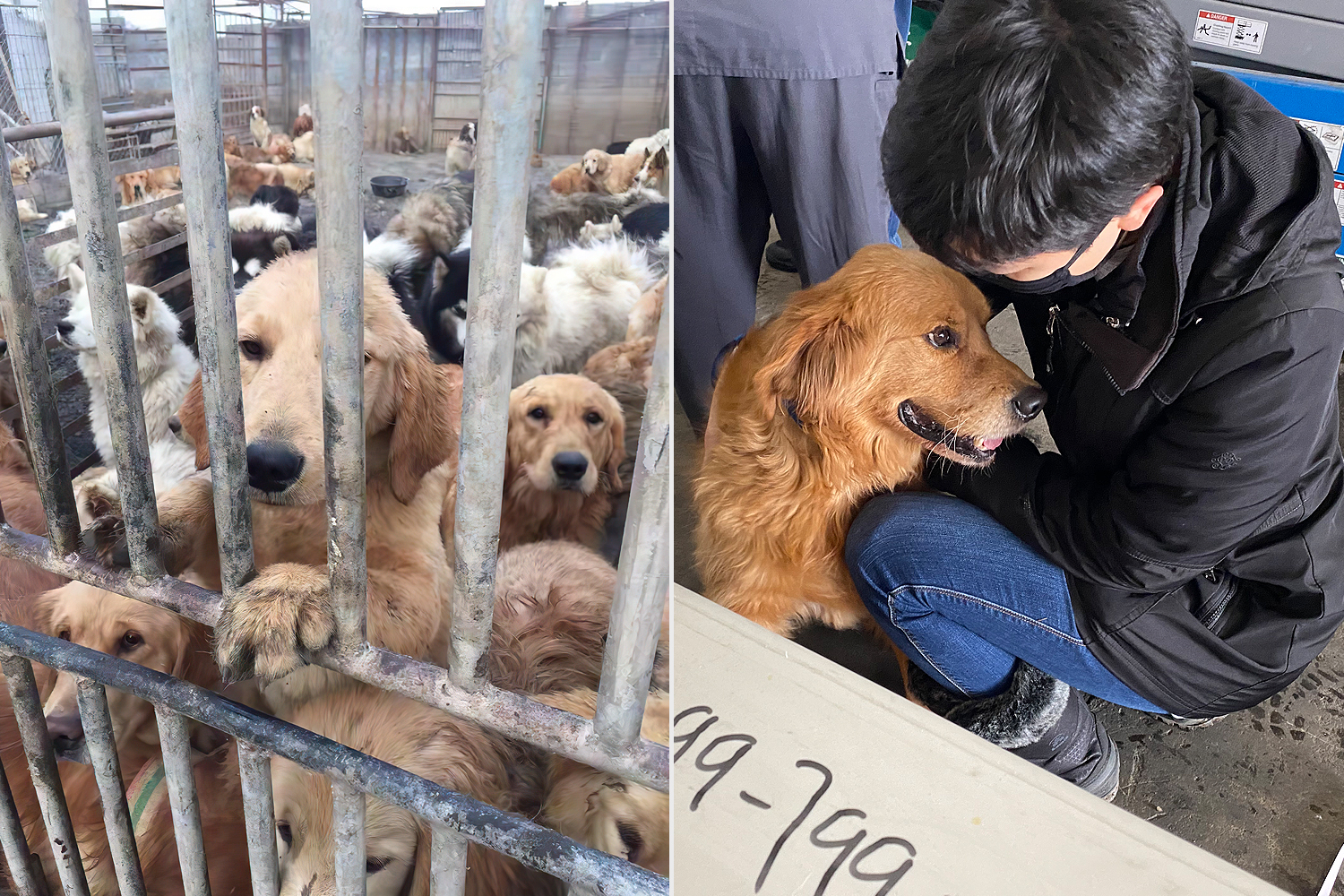 Dog Rescue from China Lands at JFK
