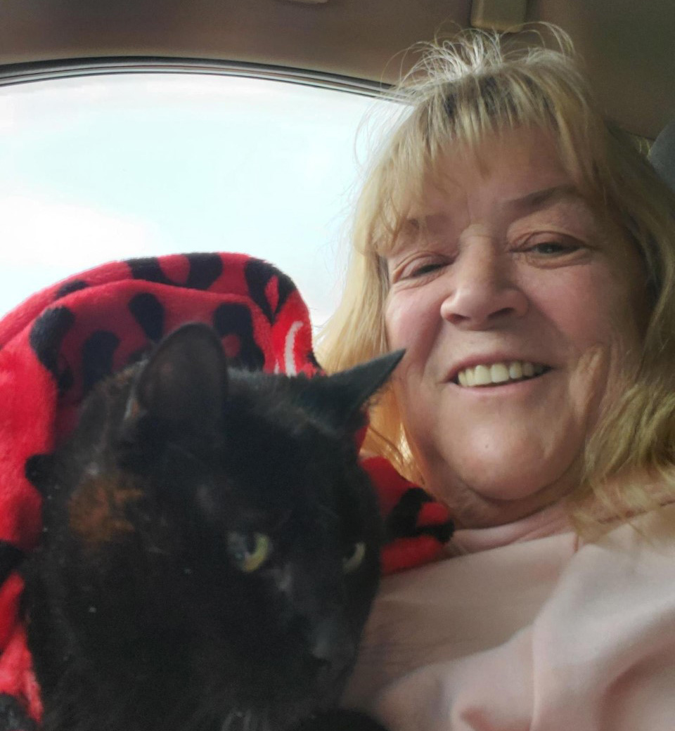 lost cat reunited with family in time for christmas