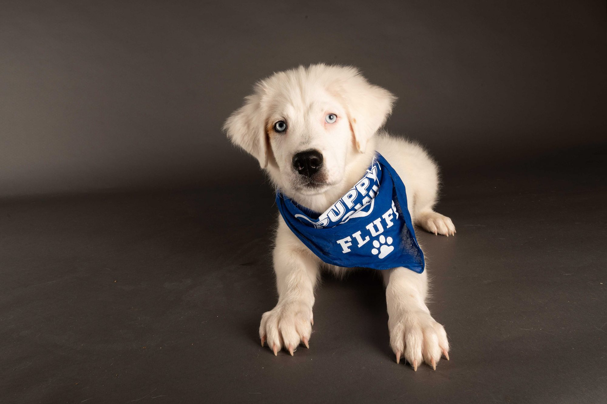 Special Needs Dogs Puppy Bowl
