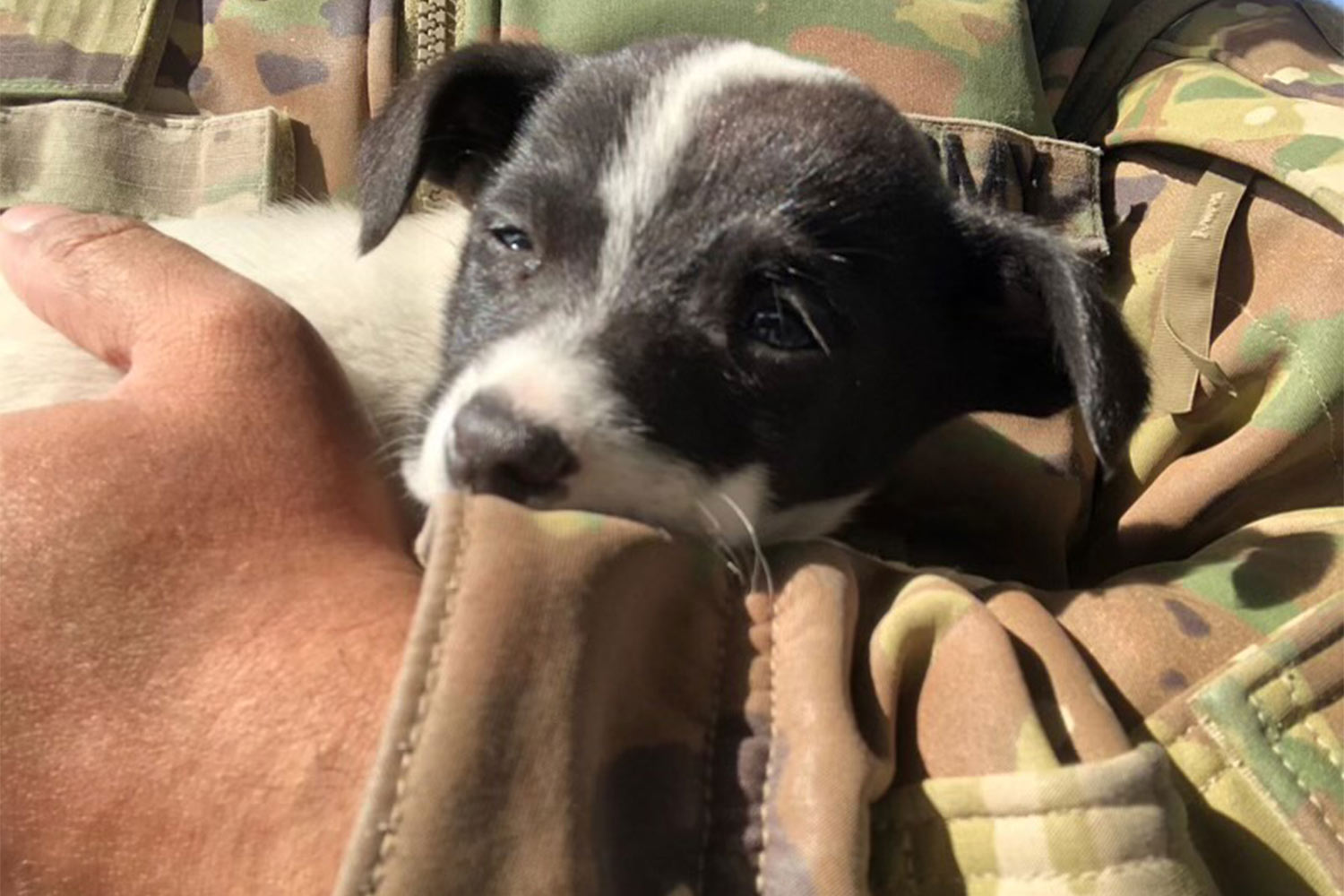 A soldier needs help bringing pup to US